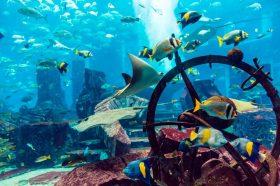 Aquarium & Under Water Zoo